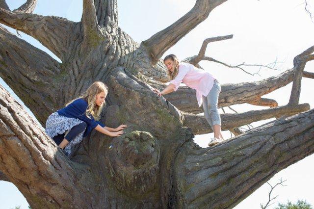 as meninas na árvore mágica