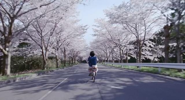 rua das cerejeiras