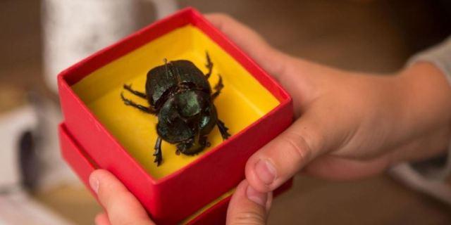 Um escaravelho numa caixa