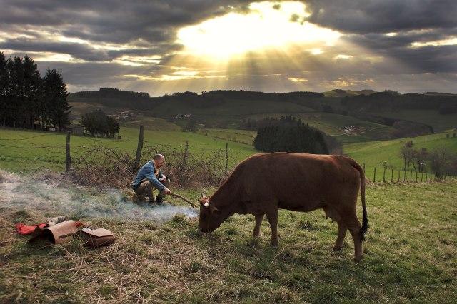acampamento bovino.jpg