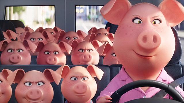 familia-imensa-de-porcos-num-o%cc%82nibus