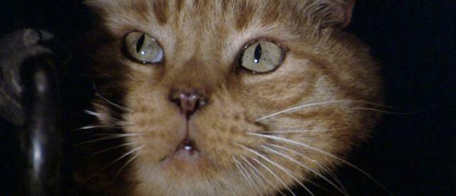 close em rosto de gato