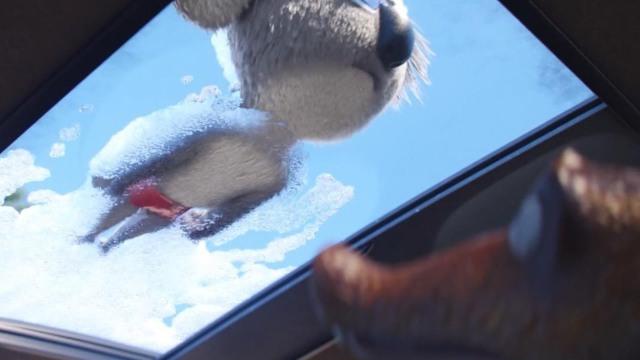 coala se usa como esponja para lavar carro