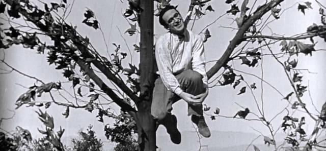 Harold pendurado em uma árvore