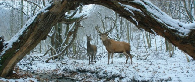 cervos na floresta